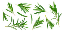 Rosemary Twig And Leaves Isolated On White Background With Clipping Path, Collection