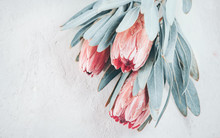 Protea Buds Closeup. Bunch Of ...