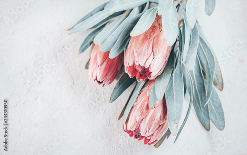 Door stickers Floral Protea buds closeup. Bunch of pink King Protea flowers over grey background. Valentine's Day bouquet