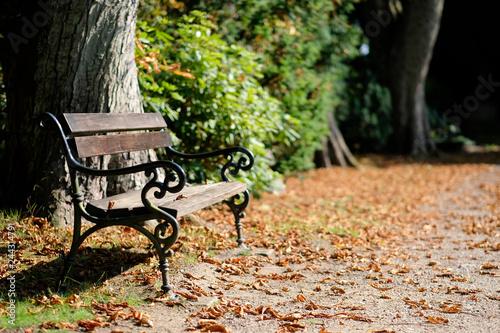 Fotografie, Obraz  Sitzbank in einem Friedhofspark im Herbst
