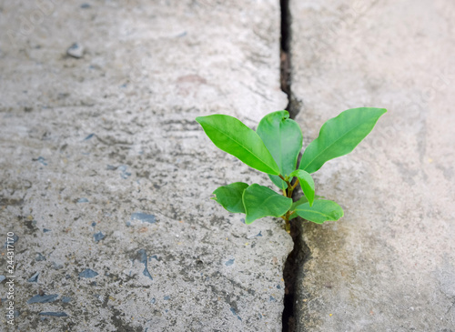 Photo  Ecology plant tree and environment drought growing on cracked street