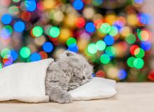 Baby Kitten Sleeping Under Blanket With Christmas Tree On Background