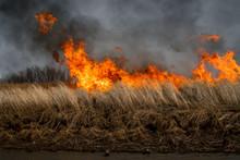 Nature Disaster, Environmental...