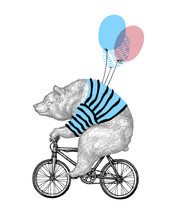 Bear Ride Bicycle Balloon Vector Illustration. Vintage Mascot Cute Grizzly Cycle Bike Isolated On White. Happy Birthday Animal Character Black Sketch. Flat Outline Teddy Grunge Draw