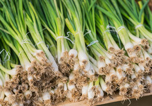 A Neat Row Of Spring Onions Bu...