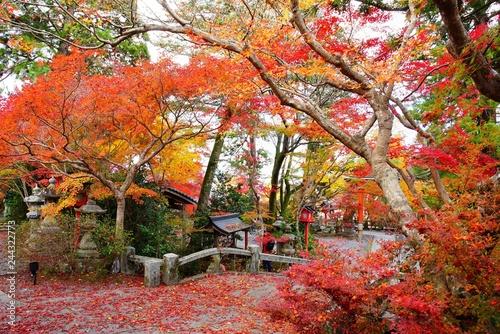 Poster Jardin 京都鍬山神社の紅葉