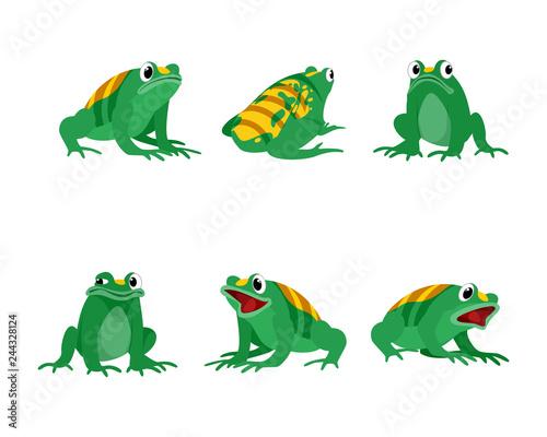 Animal hybrid frogs and bees Fototapeta