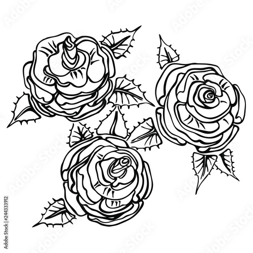 Hand drawn sketch of roses. Vector isolated outlines. Can be used to decorate invitation of the wedding, birthday, Valentine s Day, mother s day, greeting cards, wrapping paper, etc. #244333912