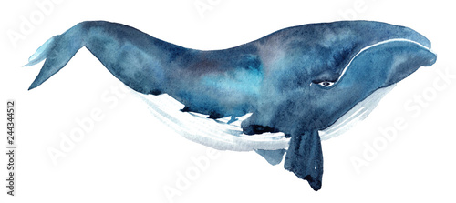 Obraz na plátne watercolor illustration of a blue whale on a white background