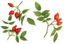 Rose Hips Isolated On White, Top View