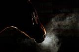 Sylwetka szary koń andaluzyjski z długą grzywą i pary z nozdrzy na białym na czarnym tle - 244365373