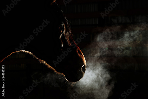 Silhouette of a gray Andalusian horse with long mane and steam from nostrils iso Canvas Print