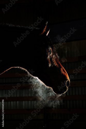 Photo Silhouette of a gray Andalusian horse with long mane and steam from nostrils iso