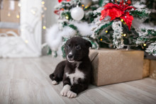 Puppy Under The Christmas Tree