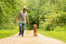 Airedale Terrier. Dog Handler Is Walking With His Odedient Dog On The Road In A Forest.