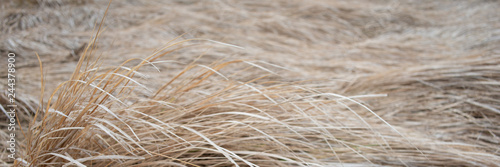 Foto auf Gartenposter Dunkelgrau dry grass in a meadow on a foggy day, panoramic landscape. Web banner for design.