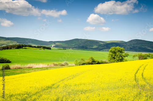Foto op Plexiglas Geel rape field background