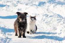 A Black Dog And A White Cat Are Sitting Together On A Snowy Street. The Concept Of Friendship, Love And Family.