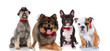 four cute dogs of different breeds with red bowties