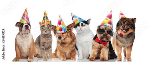 Six Cute Dogs And Cats Wearing Birthday Hats