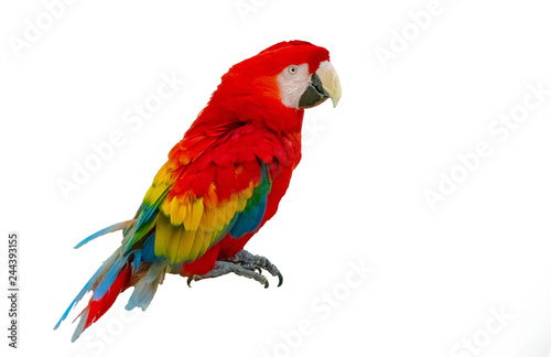 Photo Macaw parrot isolated on white background