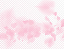 Pink Sakura Flower Falling Petals Vector Transparent Background. 3D Romantic Valentines Day Illustration. Spring Tender Light Backdrop. Overlay Tenderness Romance Design.