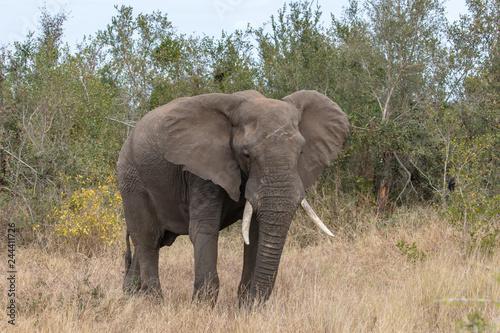 Garden Poster Elephant Elefant 59