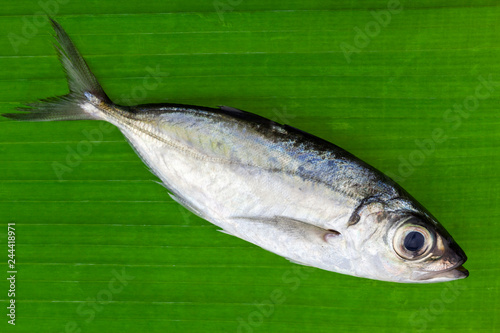 Fotografija  Selar crumenophthalmus ,Bigeye scad fish on banana leaves background