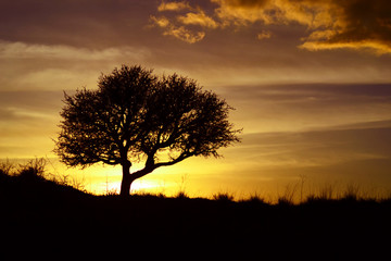 Best sunset with a tree silhouette