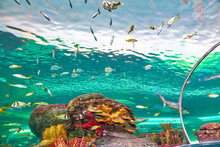 Toronto Ripleys Aquarium Underwater Scenic Tunnels
