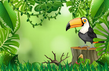 A Toucan In Nature Green Template