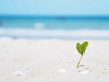 Small Plant Grow With Leaf Heart Shape On The Beach.