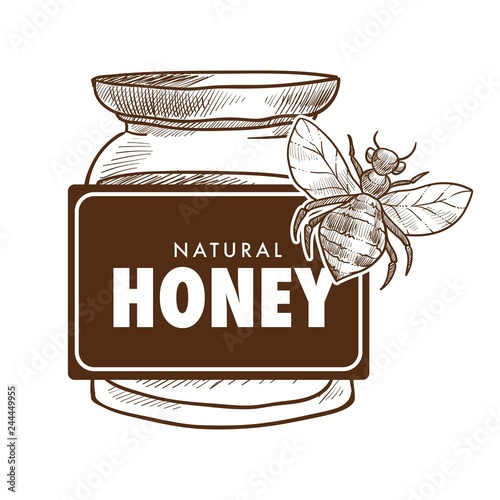 Fotografía  Pure honey poster monochrome sketch outline vector