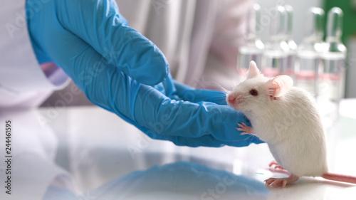 Fototapeta testing drugs and vaccine on mice