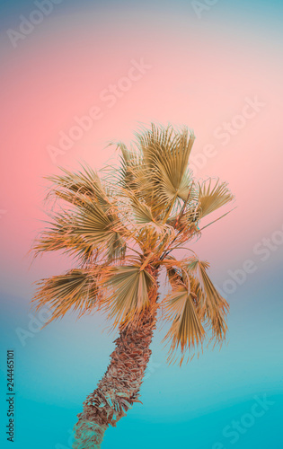 Motiv-Rollo Basic - Single bending palm tree on gradient toned teal blue coral pink background. Funky surrealistic style. Pastel Colors. Tropical beach vacation travel relaxation tranquility wanderlust concept. Poster (von olindana)