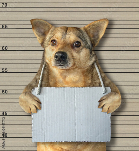 Foto  The dog with a blank sign around his neck in the prison