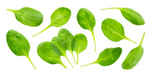 Spinach Leaves Isolated On Whi...