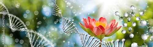 lotus flower on dna chain background
