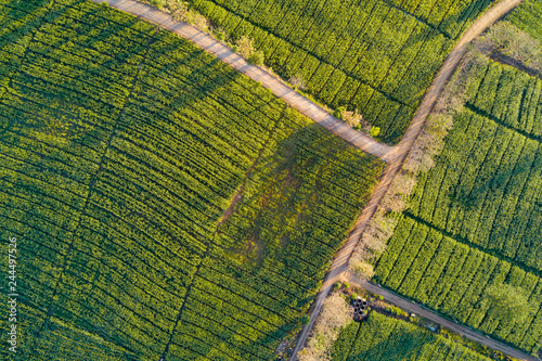 Aerial view of beautiful rural road in green corn field. Abstract geometric shapes of agricultural parcels. Lush landscape in countryside. Shot from drone. Nature and agriculture concepts