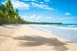 Palm trees cast shadows on a wide remote tropical Brazilian island beach in Bahia, Nordeste, Brazil