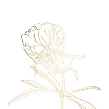 Peony Golden Outline On White Background. Spring Summer Flowers.