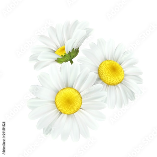 Fotografering Chamomile daisy flower isolated on white background