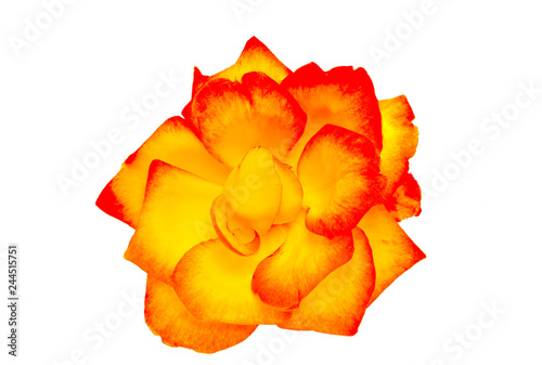 Photo  Red and yellow rose