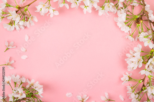 Pink springtime background with cherry blossom