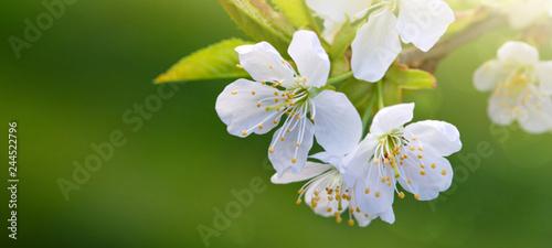 Staande foto Lente Blossom tree over green nature background. Spring background.