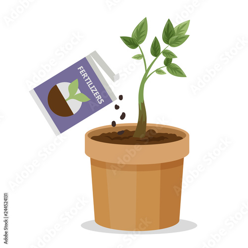 Valokuva Growing plant in the pot using plant fertilizer