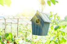Bird House Or Bird Box In Summer Sunshine With Natural Green Leaves Background. Selective Focus. Copy Space