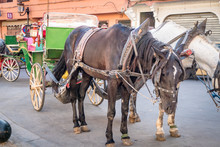 Typical Tourist Horse And Cart Transportation In Marrakesh Morocco