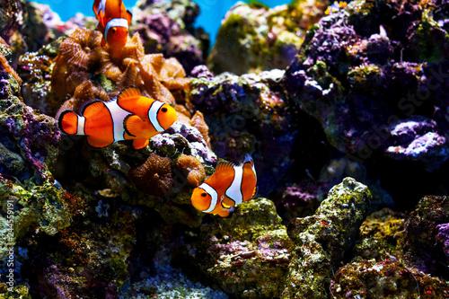 Foto op Aluminium Onder water fish