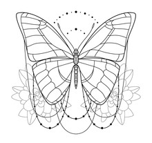 Beautiful  Butterfly Icon. Monochrome Vector Illustration Is Isolated On A White Background. Insects Art. Decorative Element With For Design.